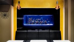 Edel-Aquarium