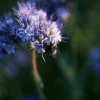 Neufi: Makro, Neufi auf Insektenjagt