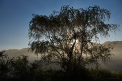 Ulrike: Landschaft im Nebel