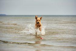 Ulrike: Usedom - Hundeaction