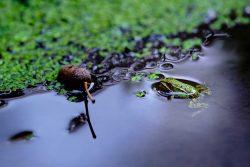 Andre: Frosch im Herbstwald