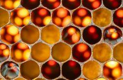 Jürgen: Bienenwabe